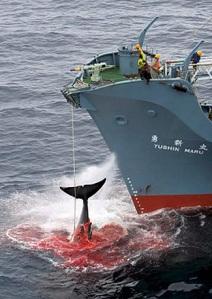 WhaleKilling